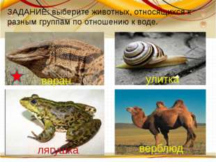 варан улитка лягушка верблюд ЗАДАНИЕ: выберите животных, относящихся к разны