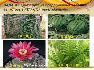 плющ арбуз кактус папоротник ЗАДАНИЕ: выберите из предложенных растений те,