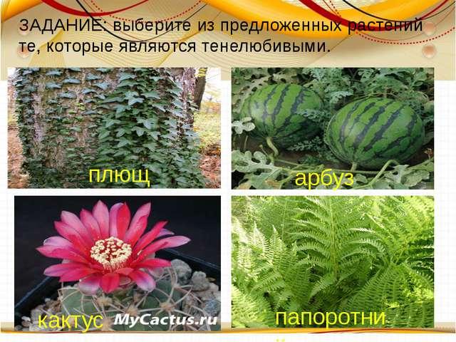 плющ арбуз кактус папоротник ЗАДАНИЕ: выберите из предложенных растений те,...