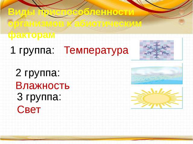 Виды приспособленности организмов к абиотическим факторам 1 группа: Температу...