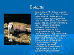 Выдры Длина тела 70—90 см, хвоста — 40—50 см, вес 6—10 кг. Голова относительн
