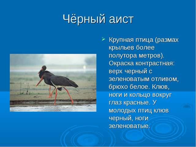 Чёрный аист Крупная птица (размах крыльев более полутора метров). Окраска кон...
