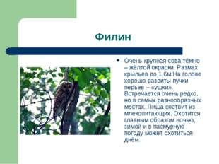 Филин Очень крупная сова тёмно – жёлтой окраски. Размах крыльев до 1,6м.На го