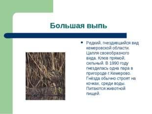 Большая выпь Редкий, гнездившийся вид кемеровской области. Цапля своеобразног