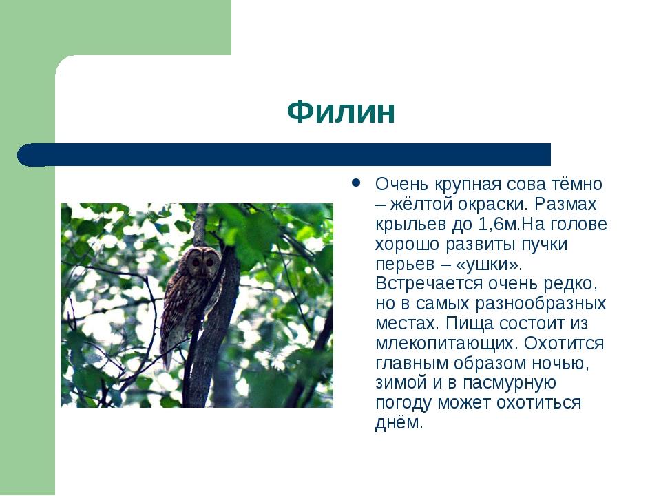 Филин Очень крупная сова тёмно – жёлтой окраски. Размах крыльев до 1,6м.На го...