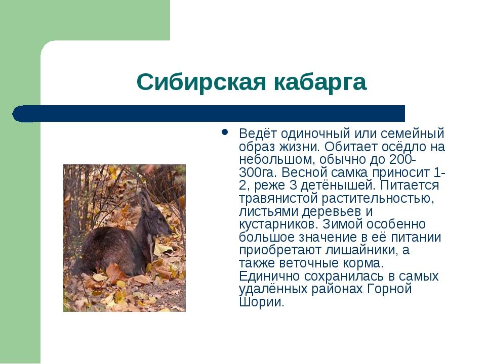 Сибирская кабарга Ведёт одиночный или семейный образ жизни. Обитает осёдло на...