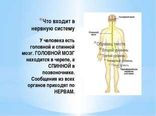 Что входит в нервную систему У человека есть головной и спинной мозг. ГОЛОВНО
