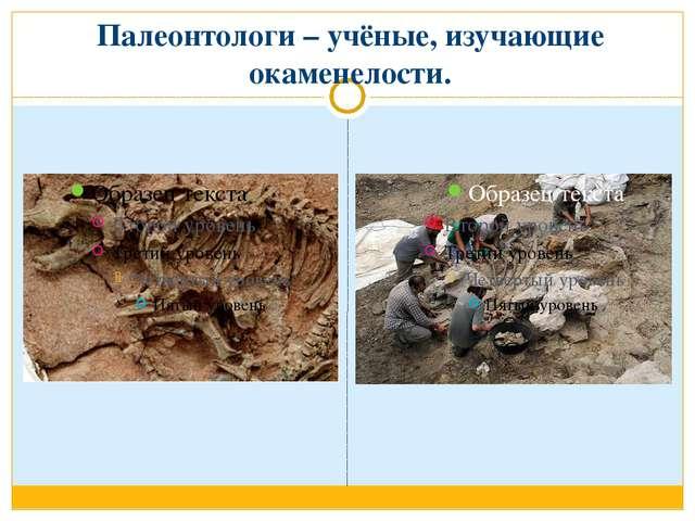 Палеонтологи – учёные, изучающие окаменелости.
