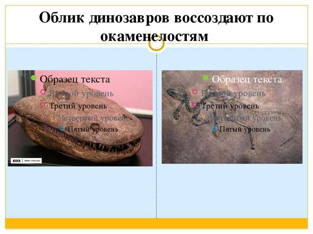 Облик динозавров воссоздают по окаменелостям