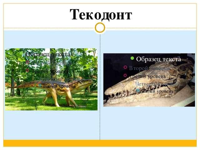 Текодонт