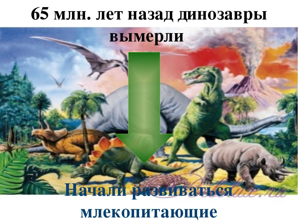 65 млн. лет назад динозавры вымерли Начали развиваться млекопитающие