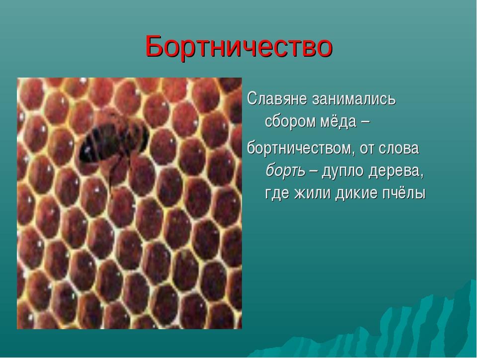 Бортничество Славяне занимались сбором мёда – бортничеством, от слова борть –...
