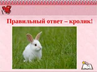 Правильный ответ – кролик!