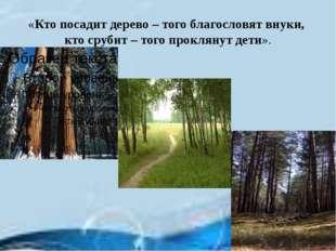 «Кто посадит дерево – того благословят внуки, кто срубит – того проклянут дет