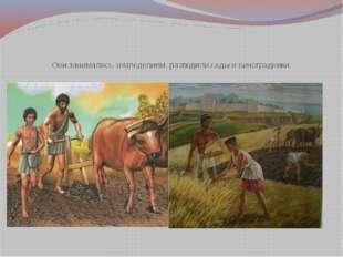 Они занимались земледелием, разводили сады и виноградники.