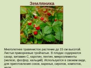 Земляника Многолетнее травянистое растение до 15 см высотой. Листья прикорнев