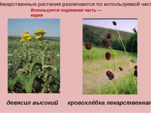 Лекарственные растения различаются по используемой части Используется подземн