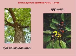 Используется надземная часть — кора крушина дуб обыкновенный