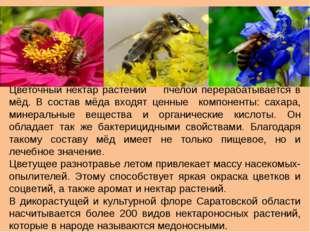 Цветочный нектар растений пчелой перерабатывается в мёд. В состав мёда входят