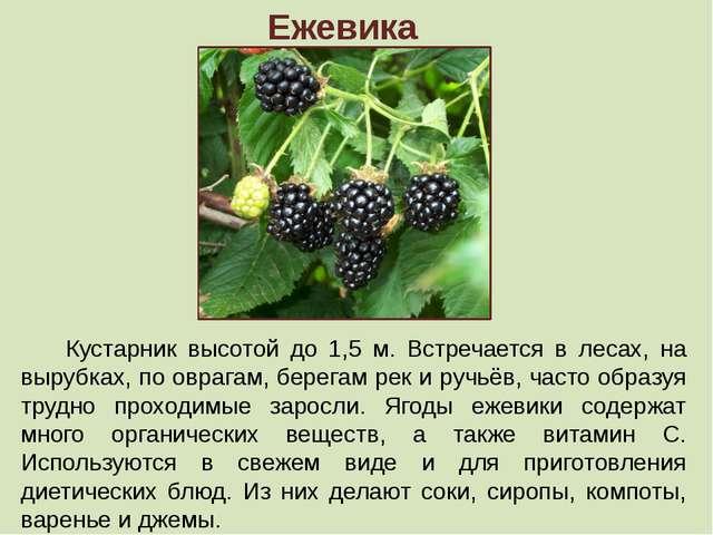 Ежевика Кустарник высотой до 1,5 м. Встречается в лесах, на вырубках, по овра...