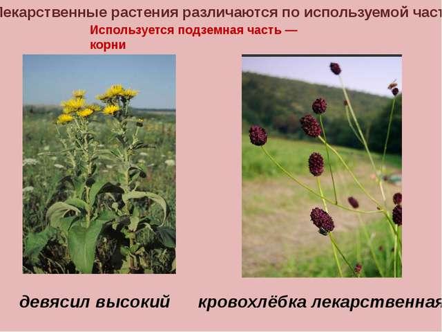 Лекарственные растения различаются по используемой части Используется подземн...