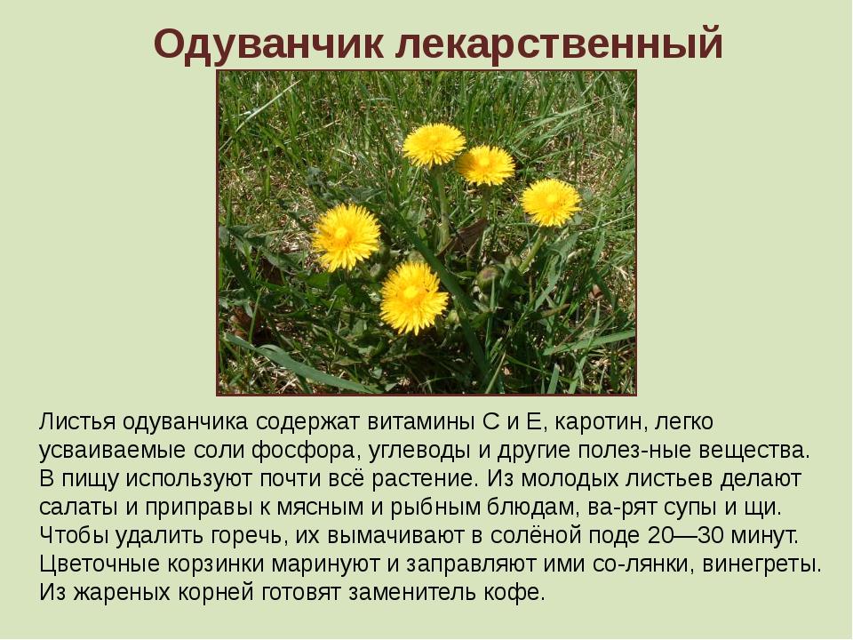 Одуванчик лекарственный Листья одуванчика содержат витамины С и Е, каротин, л...
