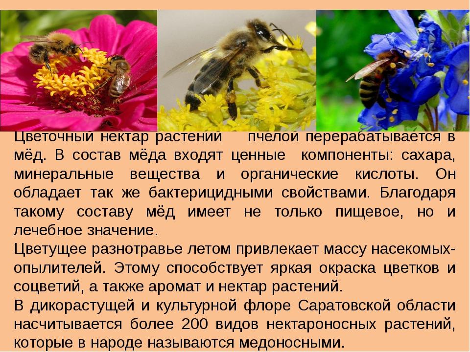 Цветочный нектар растений пчелой перерабатывается в мёд. В состав мёда входят...