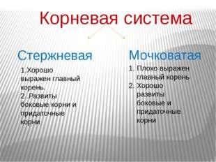 Корневая система Стержневая Мочковатая 1.Хорошо выражен главный корень. 2..Ра