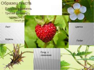 Лист Корень Цветок Побег Плод с семенами