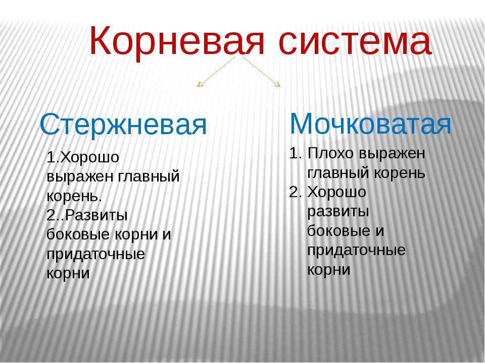 Корневая система Стержневая Мочковатая 1.Хорошо выражен главный корень. 2..Ра...