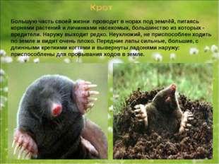 Большую часть своей жизни проводит в норах под землёй, питаясь корнями растен