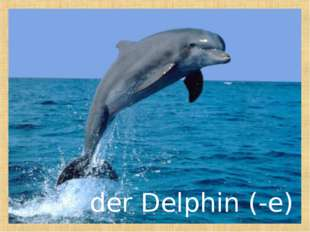 der Delphin (-e)