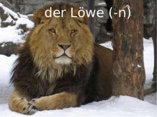 der Löwe (-n)