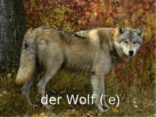der Wolf (¨e)