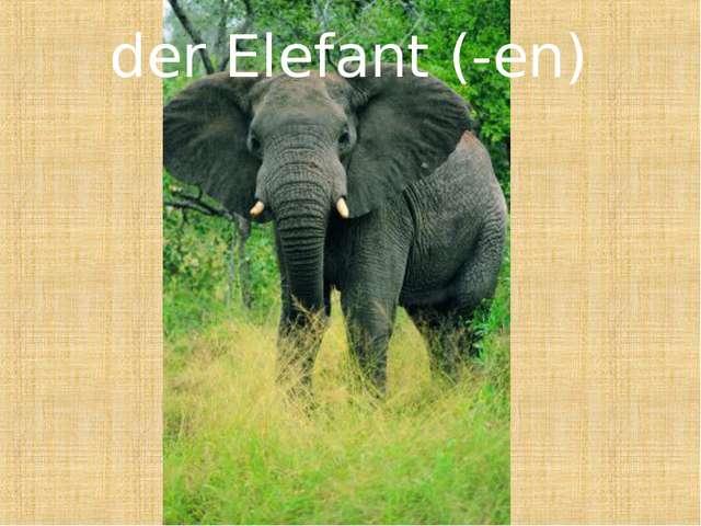 der Elefant (-en)