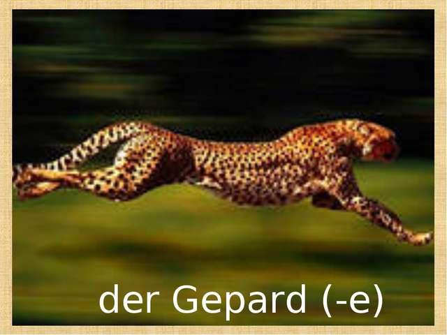 der Gepard (-e)