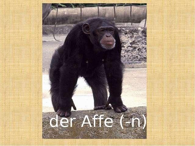 der Affe (-n)