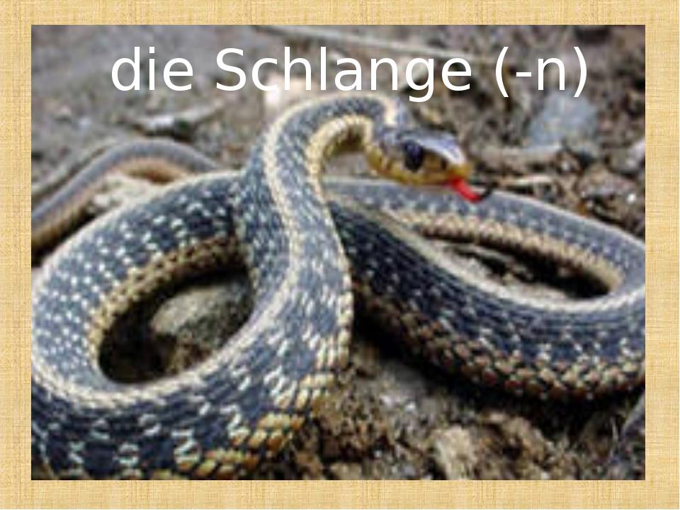 die Schlange (-n)