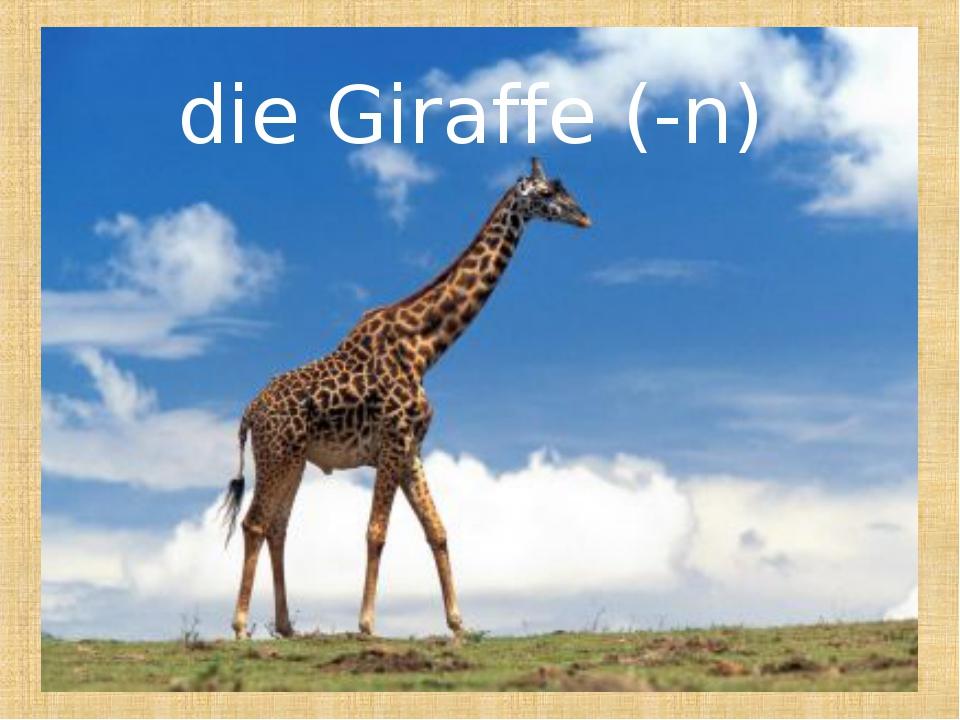 die Giraffe (-n)