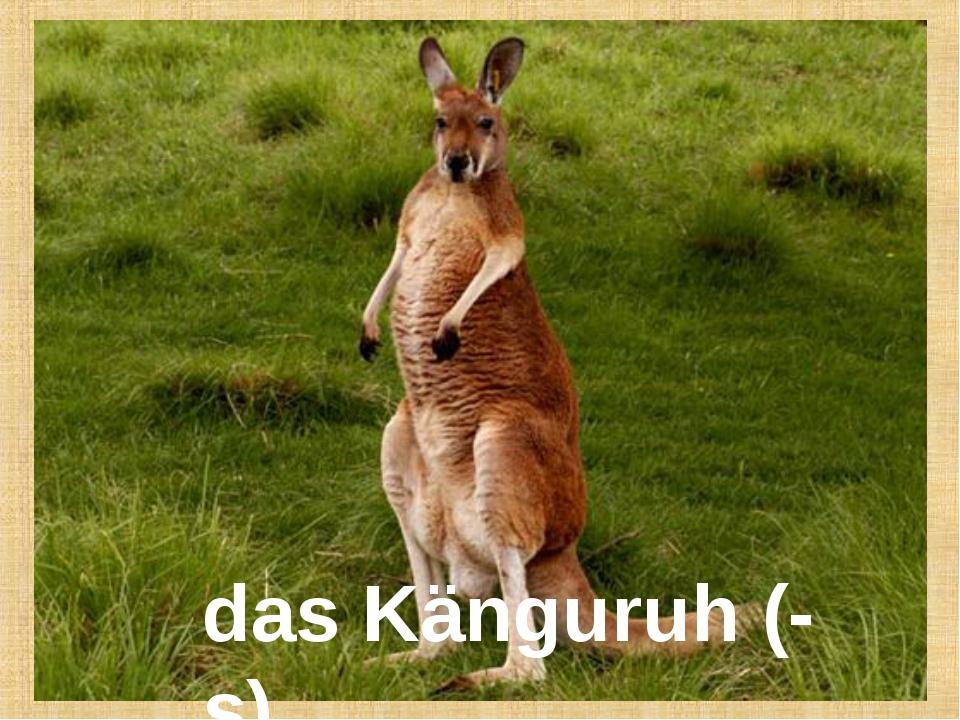 das Känguruh (-s)
