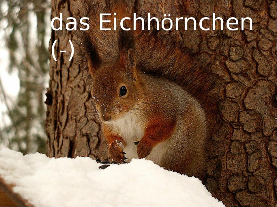 das Eichhörnchen (-)