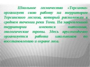 Школьное лесничество «Терсинка» организует свою работу на территории Терсинс