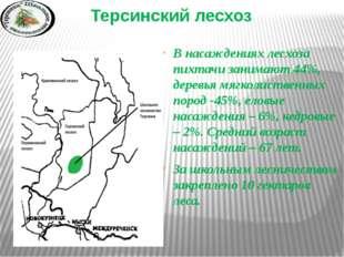 Терсинский лесхоз В насаждениях лесхоза пихтачи занимают 44%, деревья мягко
