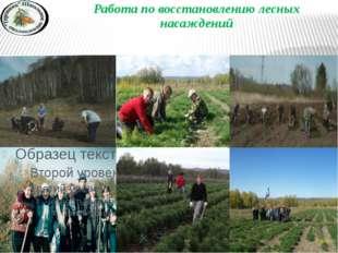 Работа по восстановлению лесных насаждений