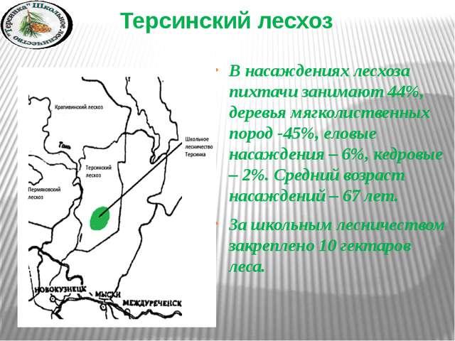 Терсинский лесхоз В насаждениях лесхоза пихтачи занимают 44%, деревья мягко...