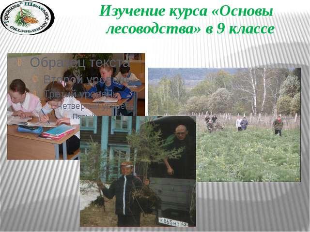 Изучение курса «Основы лесоводства» в 9 классе