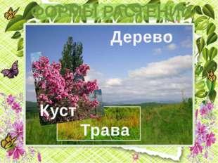 Куст Трава Дерево ФОРМЫ РАСТЕНИЙ