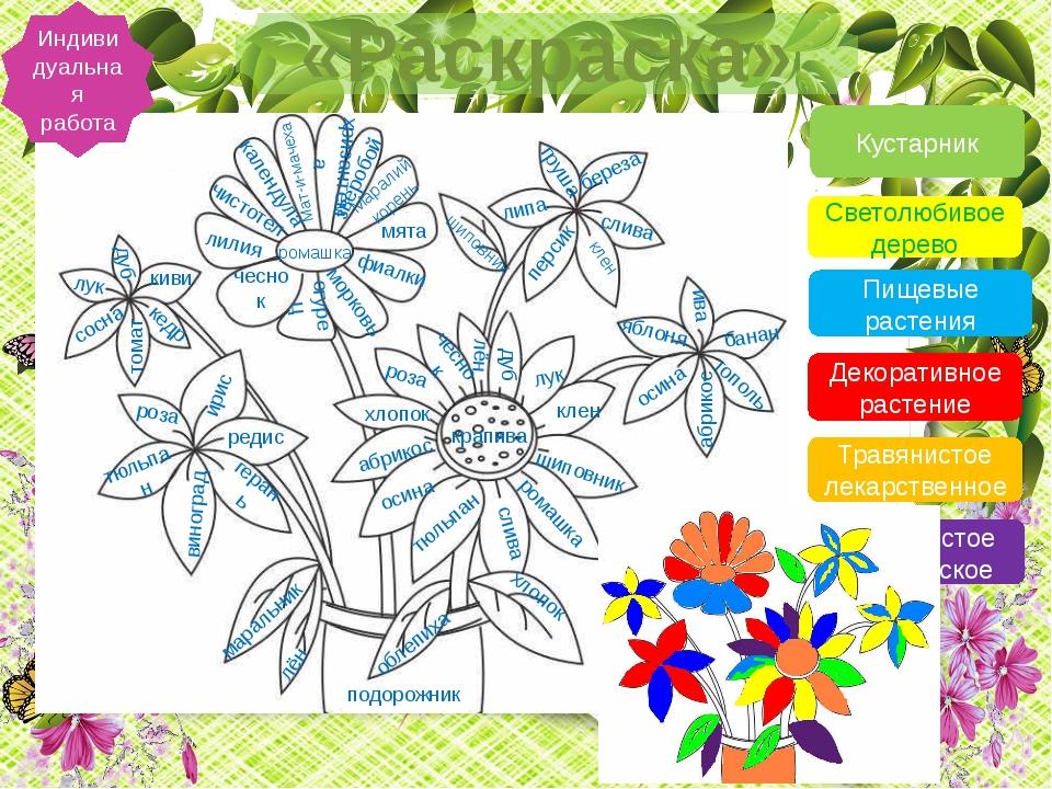 «Раскраска» Индивидуальная работа Кустарник Светолюбивое дерево Пищевые раст...