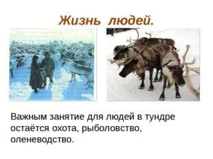 Жизнь людей. Важным занятие для людей в тундре остаётся охота, рыболовство, о