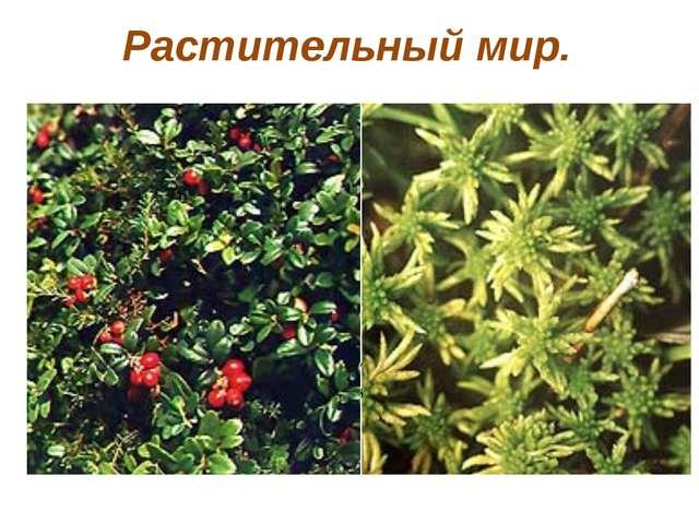 Растительный мир. В тундре растут деревья, травы, лишайники, мхи, грибы, но в...